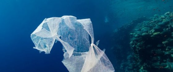 Da Pisa studio su bioshopper poco biodegradabili