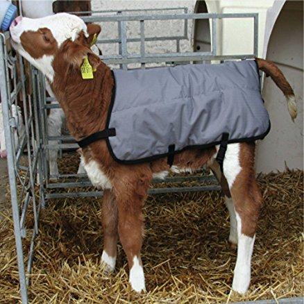 Freddo: Coldiretti, cappotti ai vitelli e torce antigelo per le viti