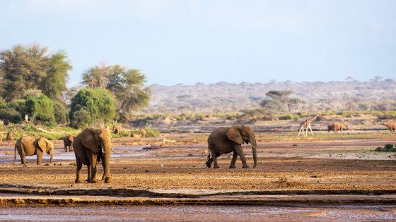 Unifi e Kenya uniti contro il cambiamento climatico