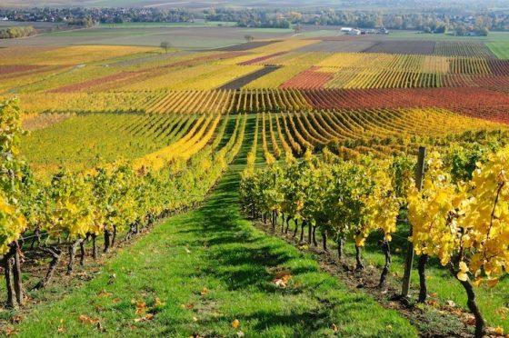 Montalcino: oltre 1 milione di evasione fiscale su uve