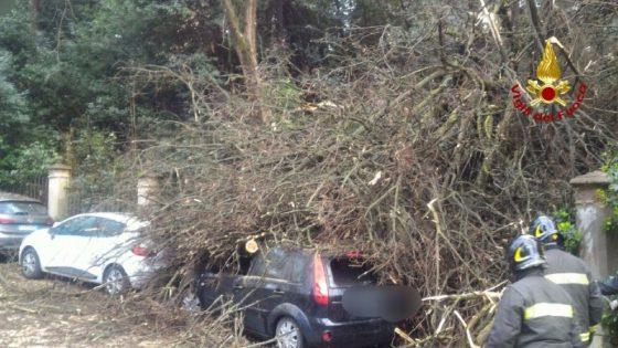 Firenze: cade albero a in viale Machiavelli, danneggiate 2 auto su viale