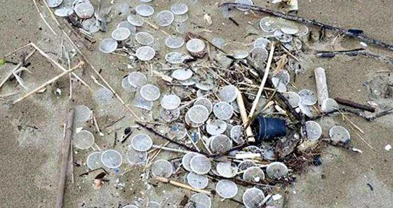 Anche su spiagge toscane i misteriosi dischetti di plastica