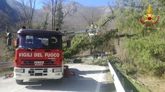 Cade albero, chiusa Ss 12 nel Pistoiese