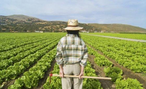 Coldiretti: ritorno all'agricoltura per 2700 giovani under 35 in Toscana