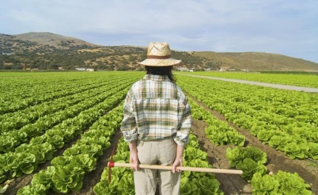 l'Azoto è molto usato in agricoltura