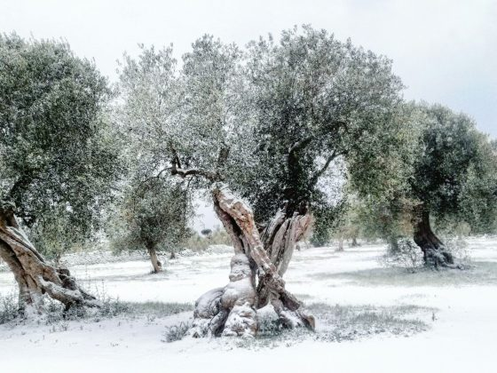Agricolrtura: gelo  'uccide' carciofi e finocchi, ma fa bene a olivi