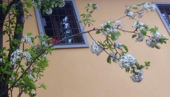 """Alberi in viale Corsica: Amici della Terra, """"Belli e profumati"""""""