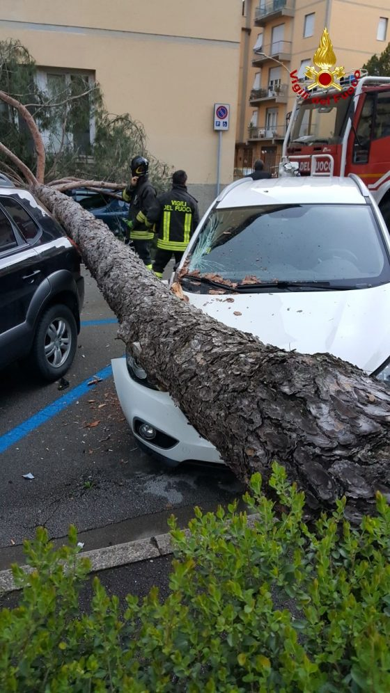 Flash news – Albero caduto su auto a Pontassieve, no feriti