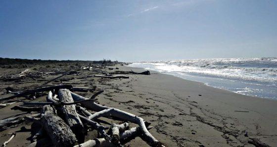 Escherichia coli, divieto balneazione spiaggia della Trappola
