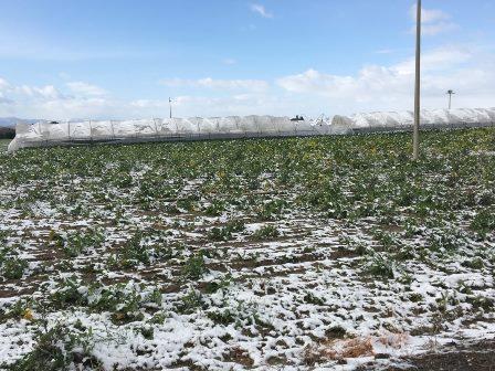 Toscana, -50% raccolti albicocche e pesche: 12 milioni di danni
