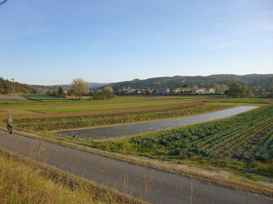Pisa: cromo6 come fertilizzante, 6 indagati