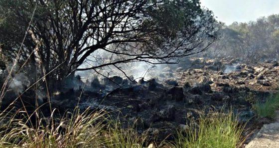 Bruciati 10 ettari di boschi ad Ansedonia