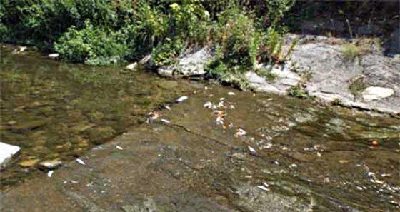 Moria di pesci nel Terzolle, il rapporto di Arpat