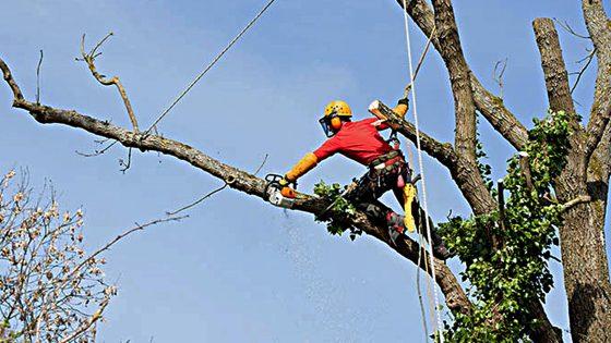 23 alberi 'pericolosi' da sostituire nel Q5