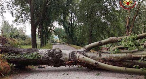 Caduto albero vicino passanti in pineta a Viareggio, no feriti