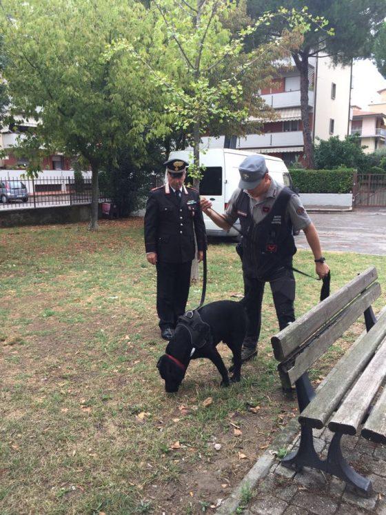 Scandicci: bocconi avvelenati contro cani e animali domestici