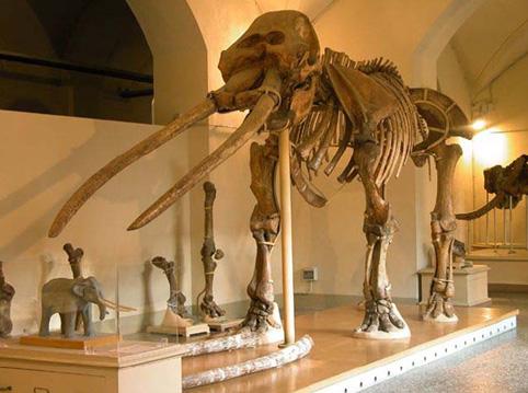Museo di Storia Naturale: campus estivo per bambini dai 6 agli 11 anni