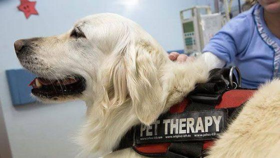 Arezzo: pet therapy per operatori Hospice