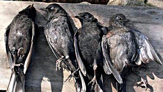 """Oggi apertura caccia, WWF: """"Guerra contro la fauna"""""""