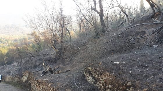 Incendio nel Pisano: Confagricoltura, in fumo 150 ettari olivi