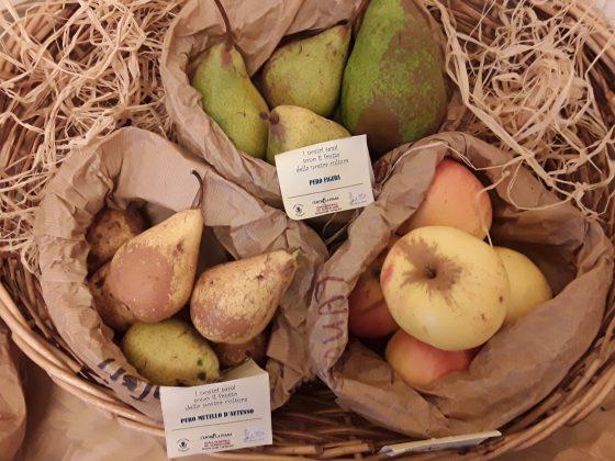 Agrobiodiversità, ad Alberese torna la 'Mostra Mercato del Coltivatore Custode'