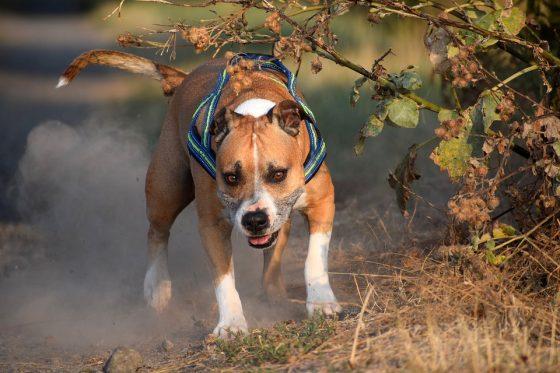 Aggredito dai suoi cani nel Grossetano, giovane padrone è gravissimo