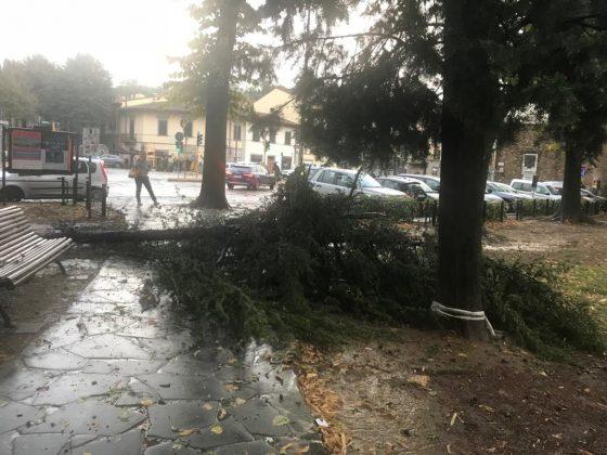 Maltempo, Firenze: allarme per alberi caduti