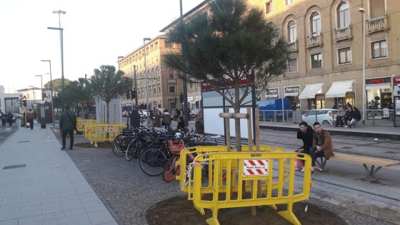 10 nuovi pini alla stazione di Santa Maria Novella