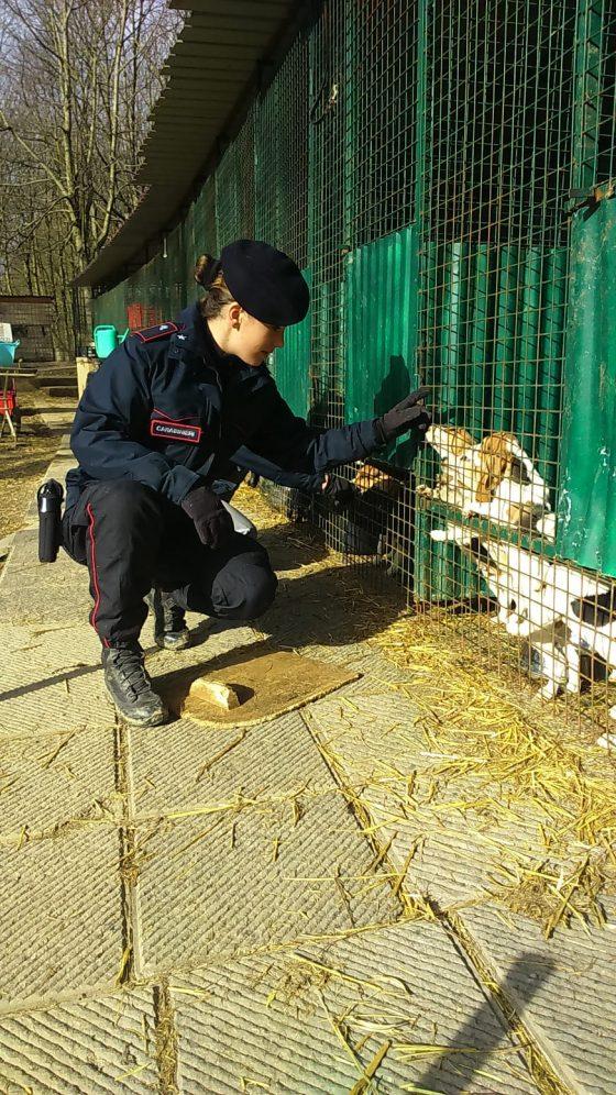 Barberino Mugello: sequestrati 226 cani in allevamento abusivo