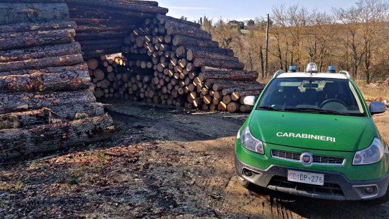 Disboscamento non autorizzato, multata ditta per 28 mila euro