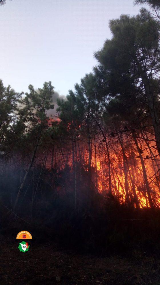 Vicopisano: incendio ancora attivo, bruciati 230 ettari