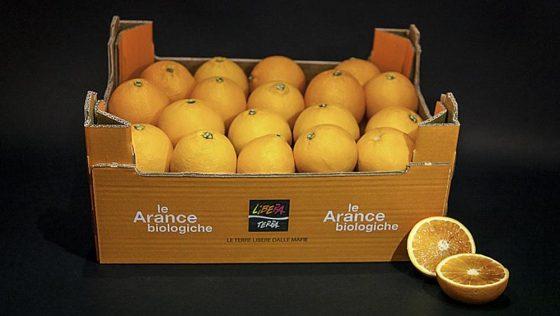 Bagno a Ripoli:  acquistati 1100 kg arance Libera