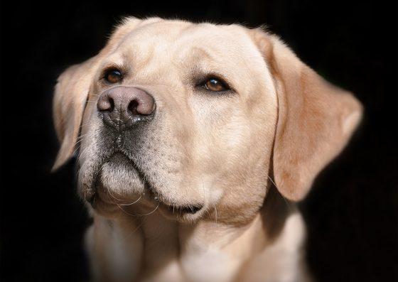 Cane in autostrada sfuggito a pasrone, salvato