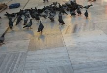 piccioni firenze