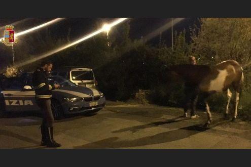 Cavallo salvato su Fi-Pi-Li e riportato in stalla