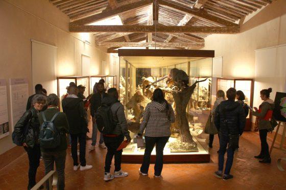 Calci, studenti stranieri: visita al 'Museo di Storia Naturale' nel segno dell'integrazione