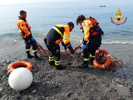 Delfini spiaggiati, in Toscana 4 casi in pochi giorni
