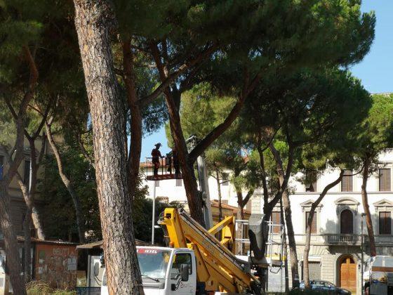 Firenze: iniziato taglio alberi in p.zza della Vittoria