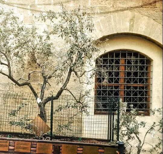 Ulivo dei Georgofili: furgone spezza ramo della pianta simbolica