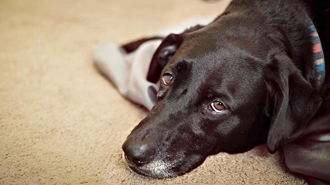 malattie di cani