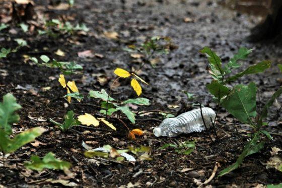 Greve in Chianti, domenica ambientale: Giunta comunale e Ris insieme per rimuovere i rifiuti