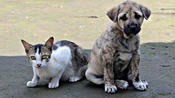 """Palazzo Vecchio: """"Non abbandonate Cani e gatti"""""""
