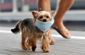Coronavirus: cani felici ma stressati, più coi padroni ma con minor socialità e movimento