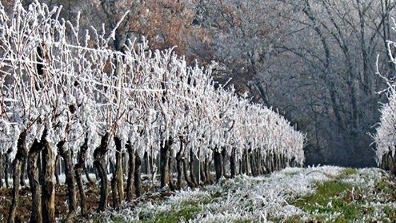 Confagricoltura Toscana, disastro: dopo il virus la gelata