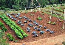 cura del verde - orti sociali