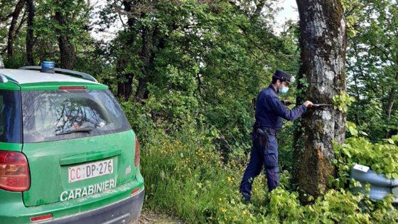 Pensionato avvelena una trentina di alberi su una provinciale, denunciato
