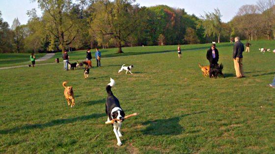 Giovedì riaprono altri giardini e aree cani comunali