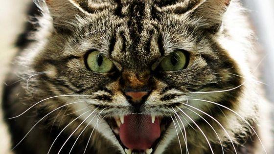Arezzo: gatto con raro Lyssavirus, veterinari vigilano pipistrelli