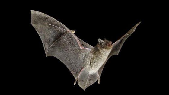 Bimba in vacanza morsa da pipistrello in Toscana