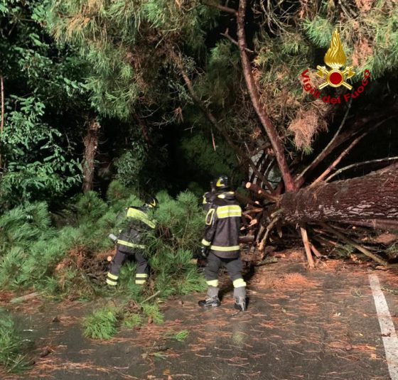 2 alberi caduti a Firenze sui viali, disagi al traffico